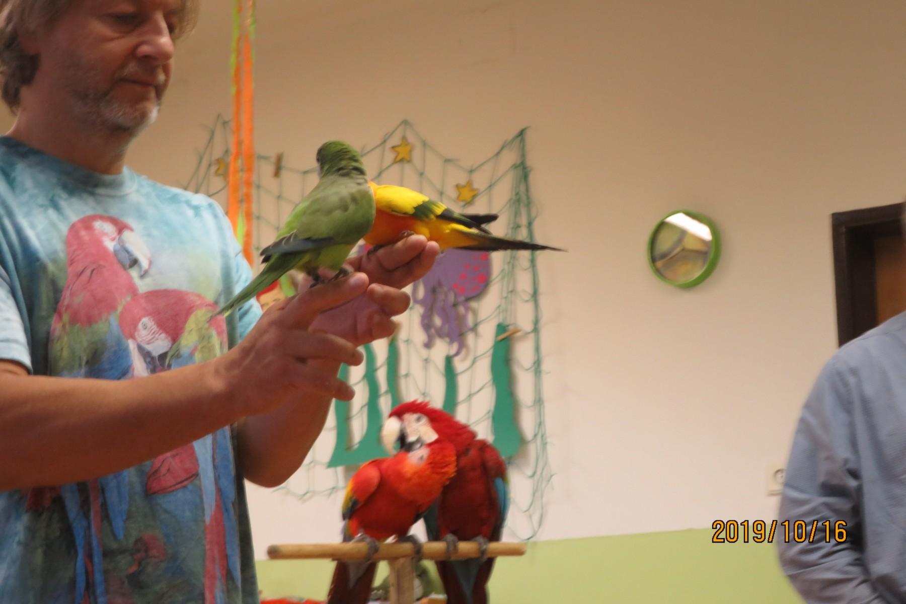 Papoušci v MŠ 16.10.2019